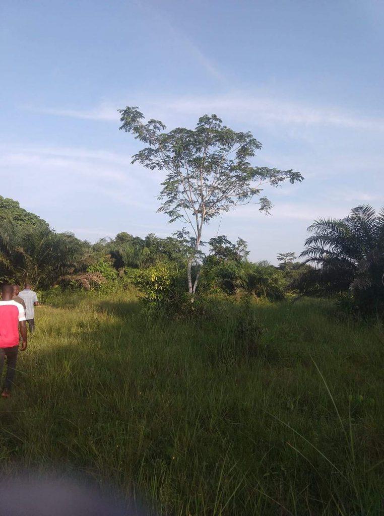 People walking in African bush.