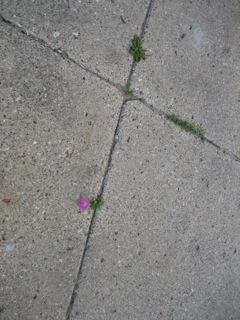 Sidewalk -Far