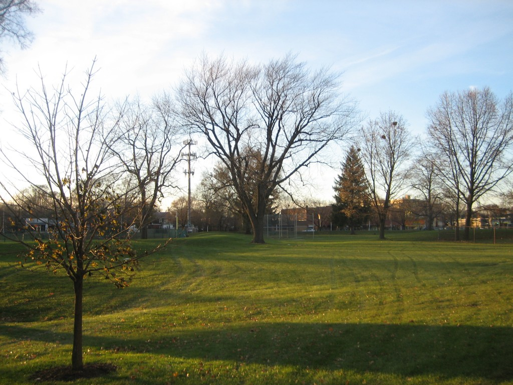 November trees - east of softball
