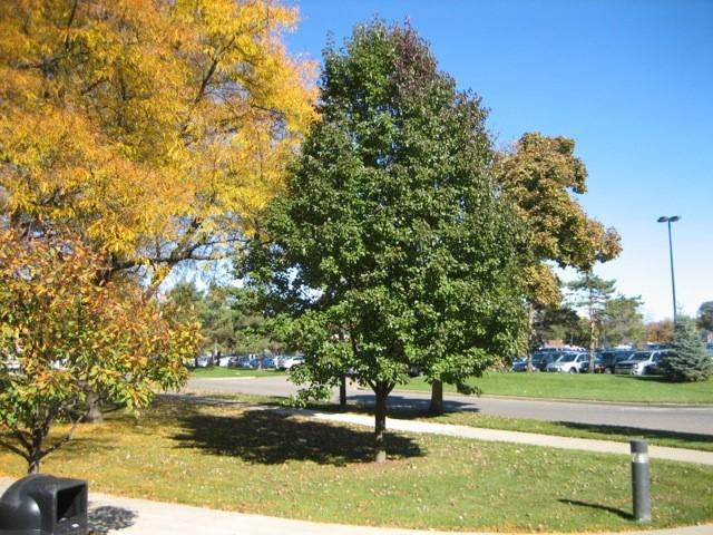 Autumn-tree2